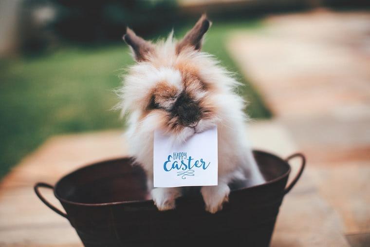 Happy Easter! Fröhlich-frische Geschenkideen
