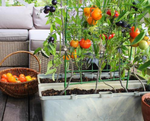 DIY: Gemüsebeet für Zuhause