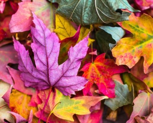 Der Herbst wird bunt!