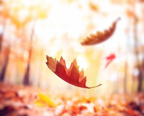 Must Wear im Herbst