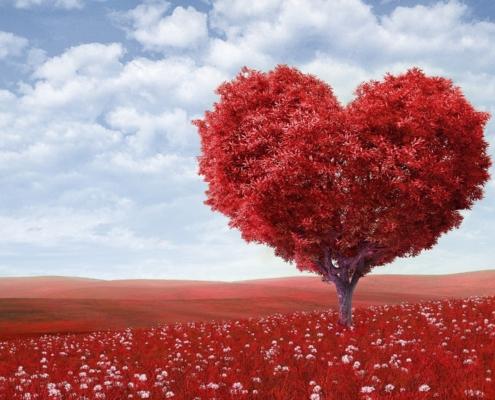 Verliebt in: Rosé